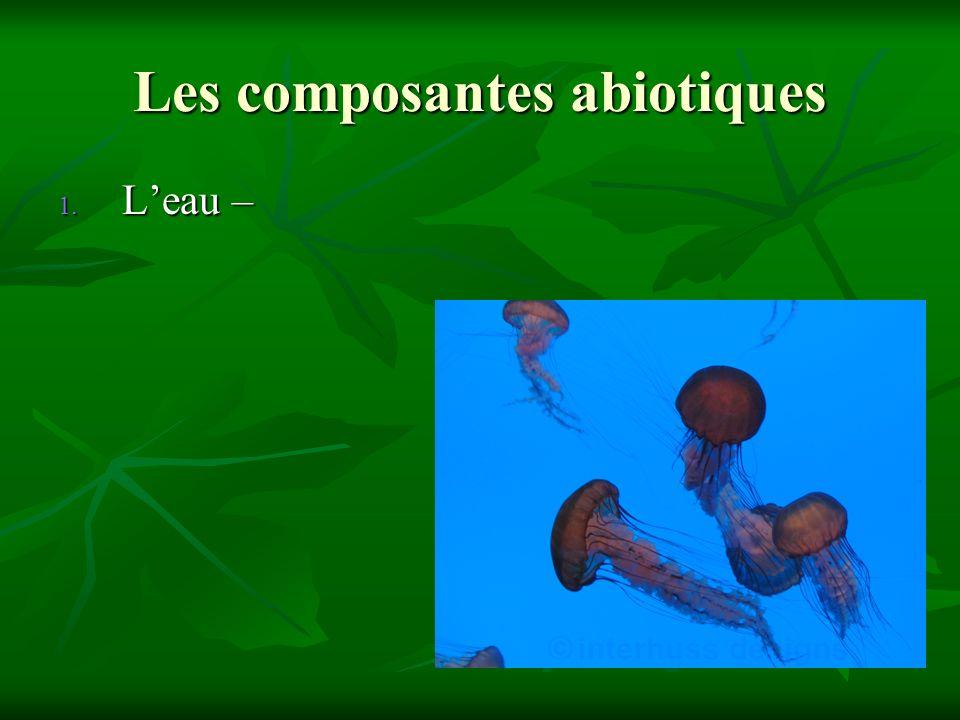 Les composantes abiotiques 1. Leau –