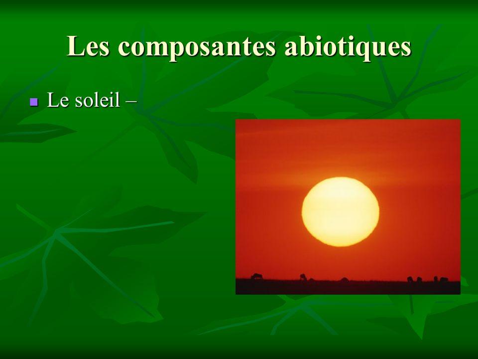 Les composantes abiotiques Le soleil – Le soleil –