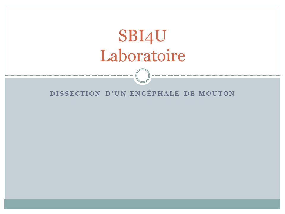 DISSECTION DUN ENCÉPHALE DE MOUTON SBI4U Laboratoire