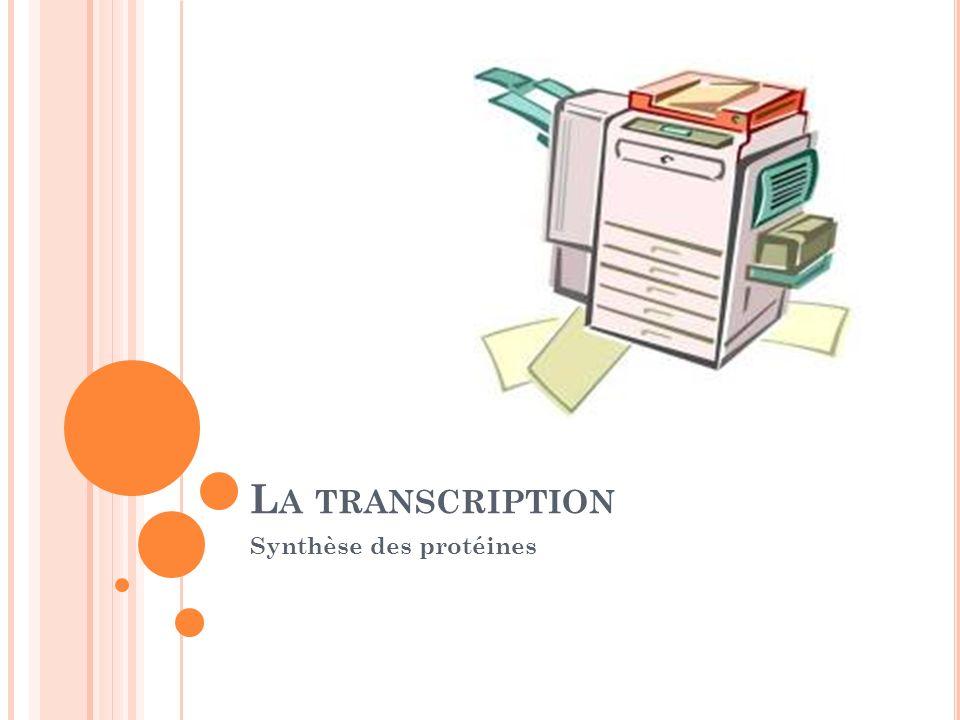L A TRANSCRIPTION Synthèse des protéines