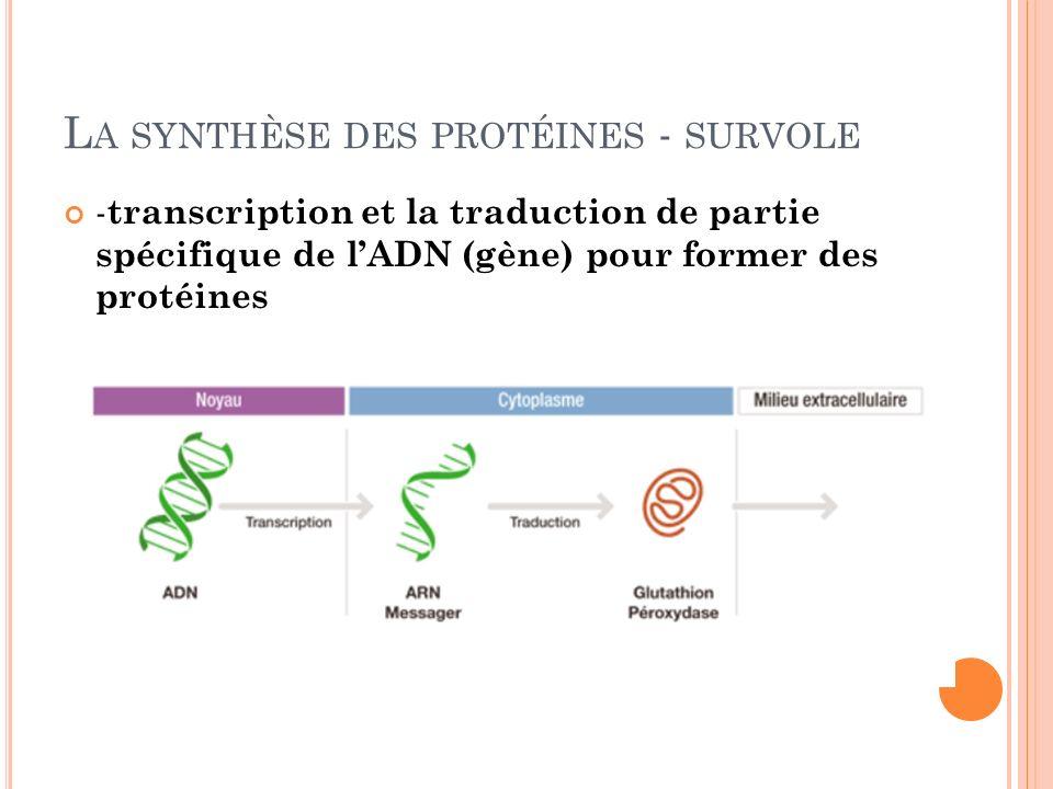 L A SYNTHÈSE DES PROTÉINES - SURVOLE - transcription et la traduction de partie spécifique de lADN (gène) pour former des protéines