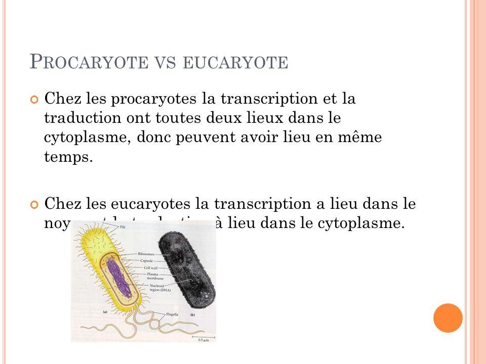 P ROCARYOTE VS EUCARYOTE Chez les procaryotes la transcription et la traduction ont toutes deux lieux dans le cytoplasme, donc peuvent avoir lieu en m