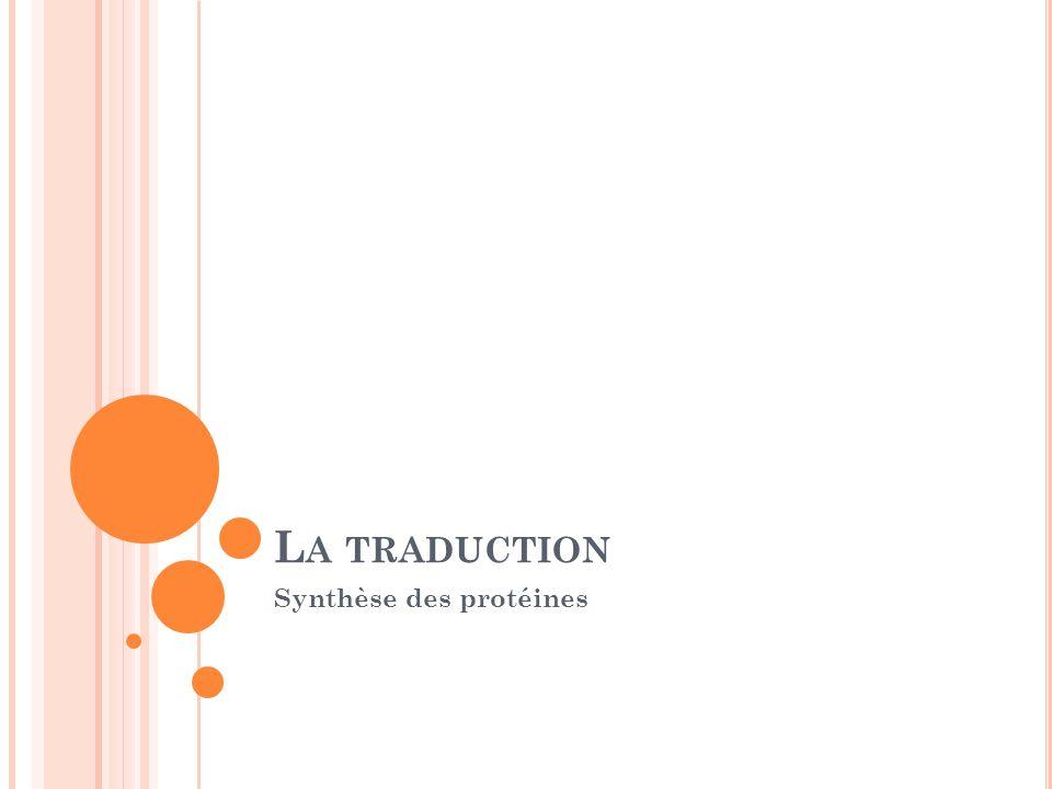 L A TRADUCTION Synthèse des protéines