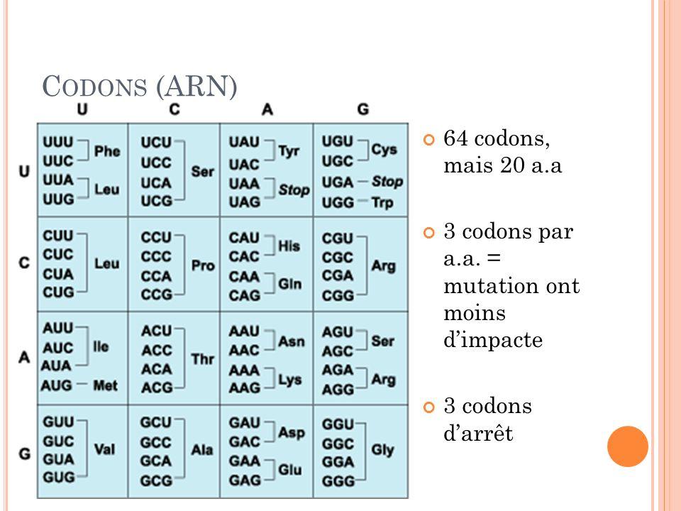 C ODONS (ARN) 64 codons, mais 20 a.a 3 codons par a.a. = mutation ont moins dimpacte 3 codons darrêt