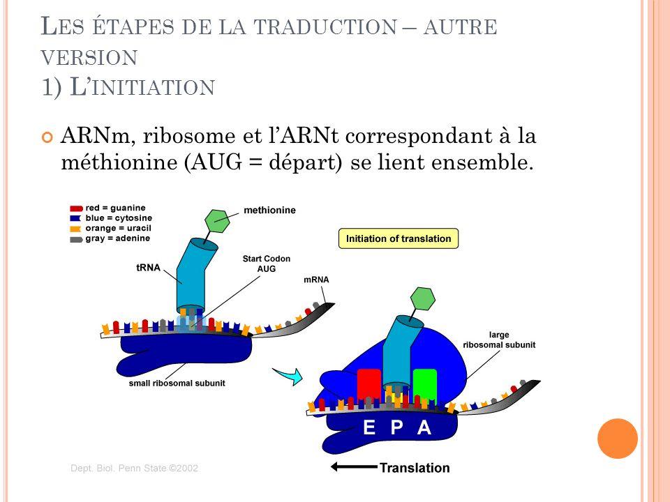 L ES ÉTAPES DE LA TRADUCTION – AUTRE VERSION 1) L INITIATION ARNm, ribosome et lARNt correspondant à la méthionine (AUG = départ) se lient ensemble.