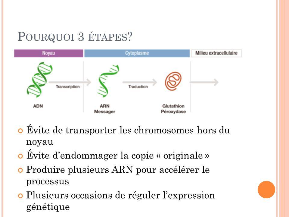P OURQUOI 3 ÉTAPES ? Évite de transporter les chromosomes hors du noyau Évite dendommager la copie « originale » Produire plusieurs ARN pour accélérer