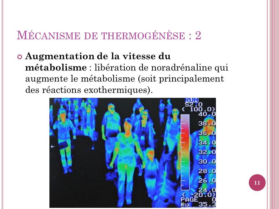 M ÉCANISME DE THERMOGÉNÈSE : 2 Augmentation de la vitesse du métabolisme : libération de noradrénaline qui augmente le métabolisme (soit principalemen