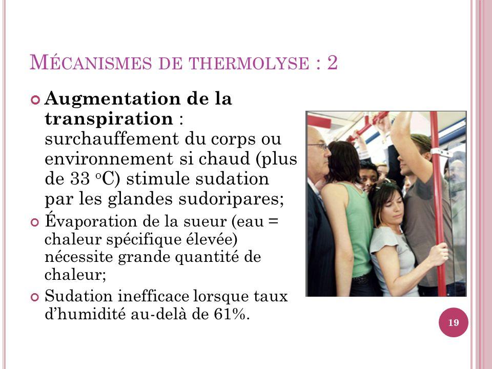 M ÉCANISMES DE THERMOLYSE : 2 Augmentation de la transpiration : surchauffement du corps ou environnement si chaud (plus de 33 o C) stimule sudation p
