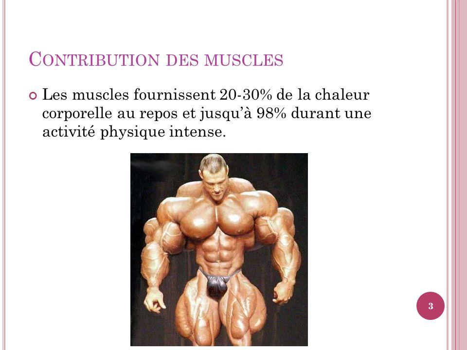 C ONTRIBUTION DES MUSCLES Les muscles fournissent 20-30% de la chaleur corporelle au repos et jusquà 98% durant une activité physique intense. 3