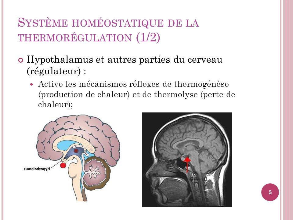 S YSTÈME HOMÉOSTATIQUE DE LA THERMORÉGULATION (1/2) Hypothalamus et autres parties du cerveau (régulateur) : Active les mécanismes réflexes de thermog