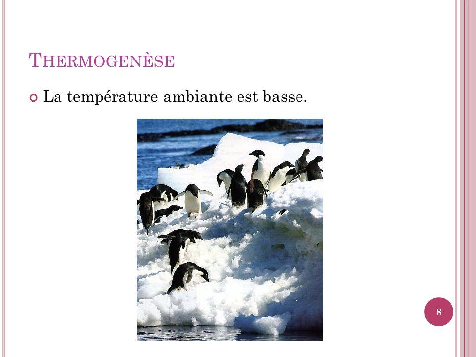 M ÉCANISMES DE THERMOLYSE : 2 Augmentation de la transpiration : surchauffement du corps ou environnement si chaud (plus de 33 o C) stimule sudation par les glandes sudoripares; Évaporation de la sueur (eau = chaleur spécifique élevée) nécessite grande quantité de chaleur; Sudation inefficace lorsque taux dhumidité au-delà de 61%.