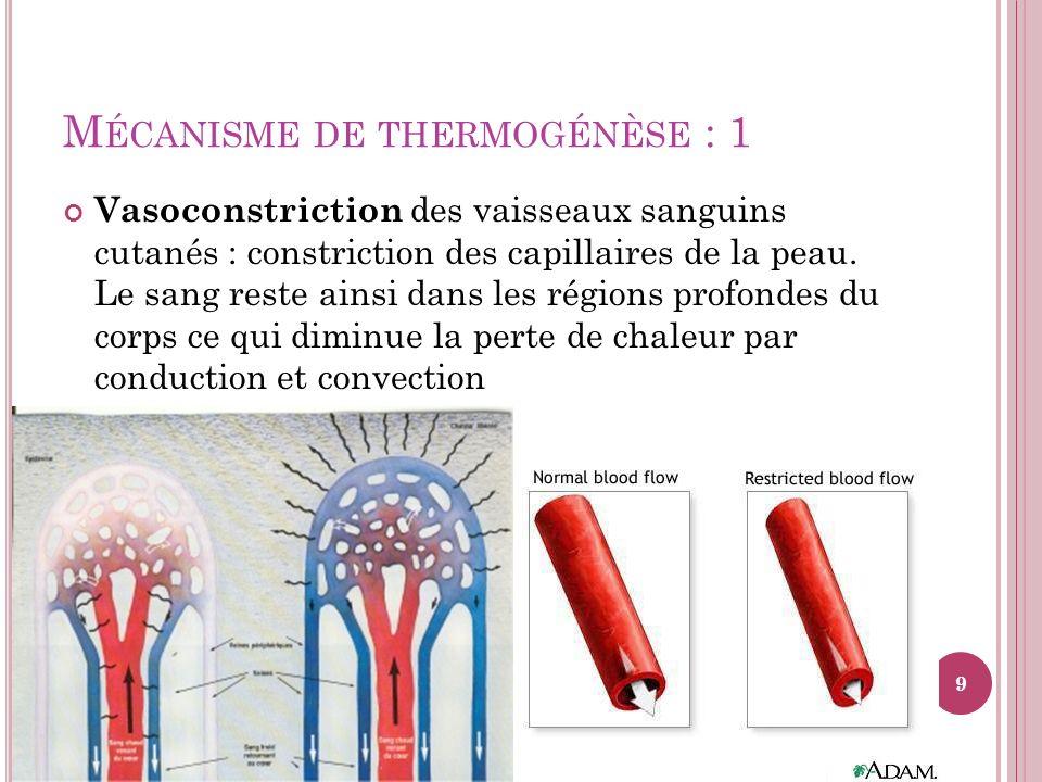 M ÉCANISME DE THERMOGÉNÈSE : 1 Vasoconstriction des vaisseaux sanguins cutanés : constriction des capillaires de la peau. Le sang reste ainsi dans les