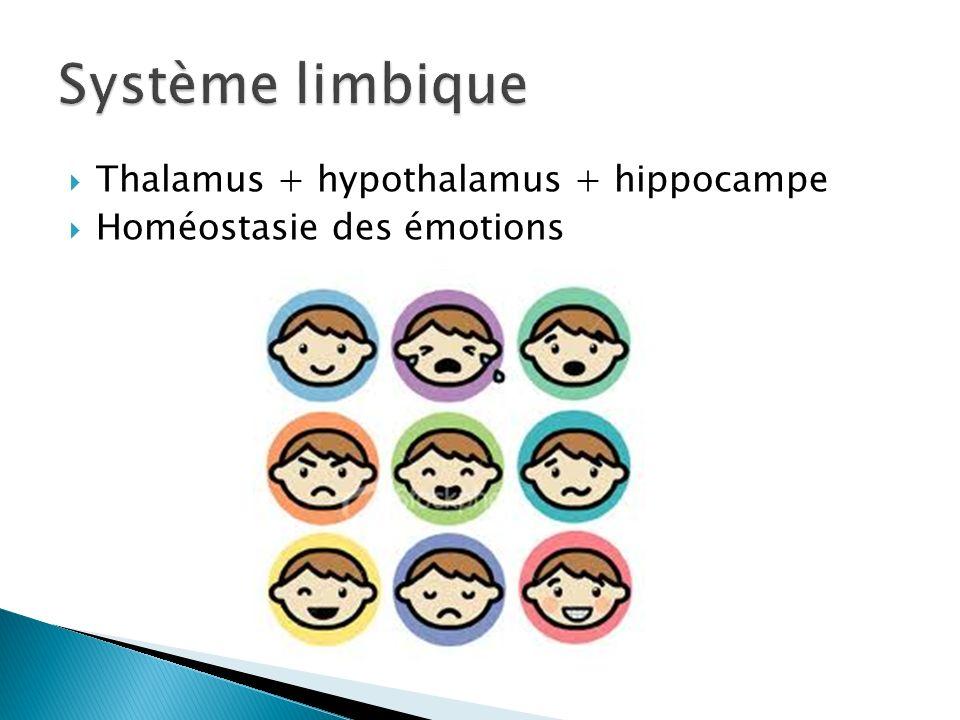 Thalamus + hypothalamus + hippocampe Homéostasie des émotions
