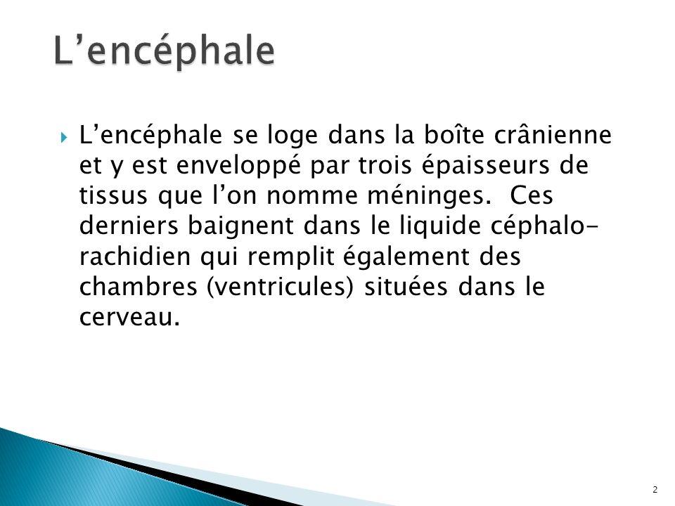 Lencéphale se loge dans la boîte crânienne et y est enveloppé par trois épaisseurs de tissus que lon nomme méninges. Ces derniers baignent dans le liq
