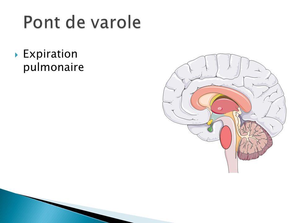 Expiration pulmonaire