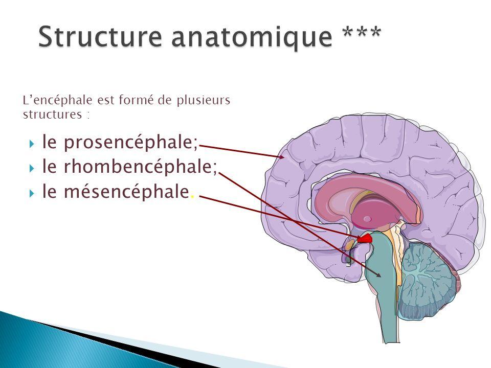 Le cerveau Lobe frontal Lobe pariétal Lobe temporal Lobe occipital Le thalamus Lhypothalamus Le système limbique Lhippocampe