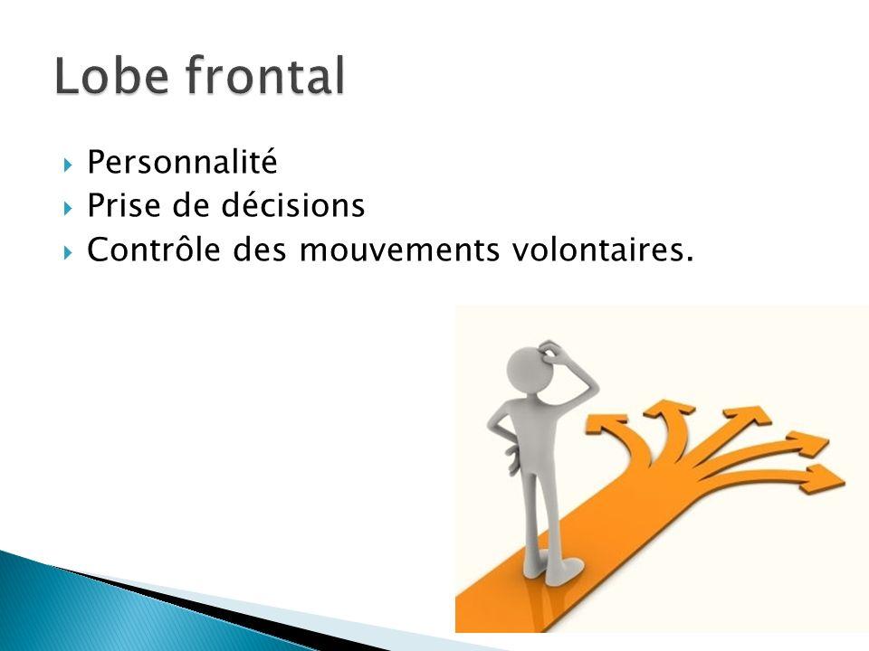 Personnalité Prise de décisions Contrôle des mouvements volontaires.