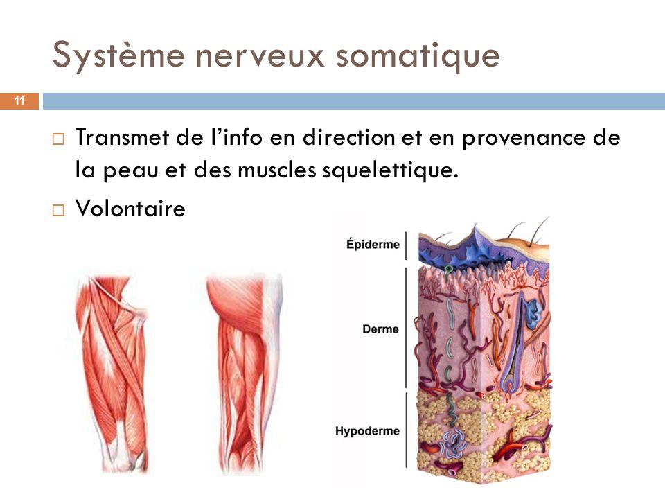 Système nerveux somatique Transmet de linfo en direction et en provenance de la peau et des muscles squelettique. Volontaire 11