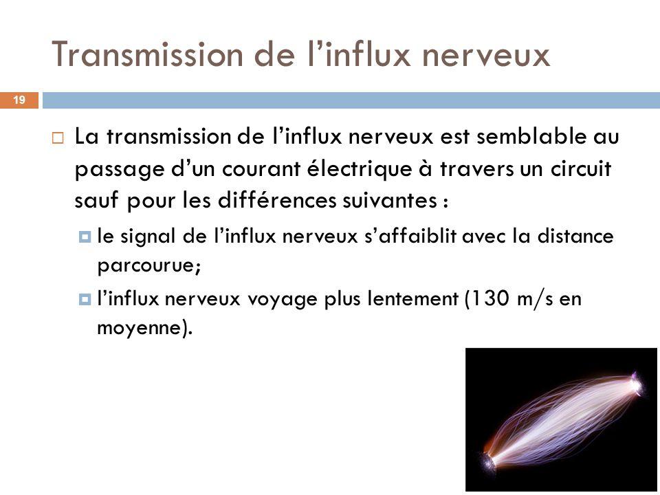 Transmission de linflux nerveux La transmission de linflux nerveux est semblable au passage dun courant électrique à travers un circuit sauf pour les