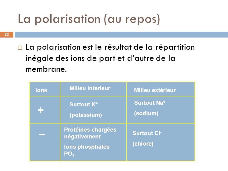 La polarisation est le résultat de la répartition inégale des ions de part et dautre de la membrane. La polarisation (au repos) Ions + – Milieu intéri