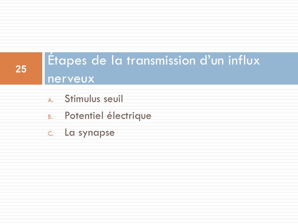 A. Stimulus seuil B. Potentiel électrique C. La synapse Étapes de la transmission dun influx nerveux 25