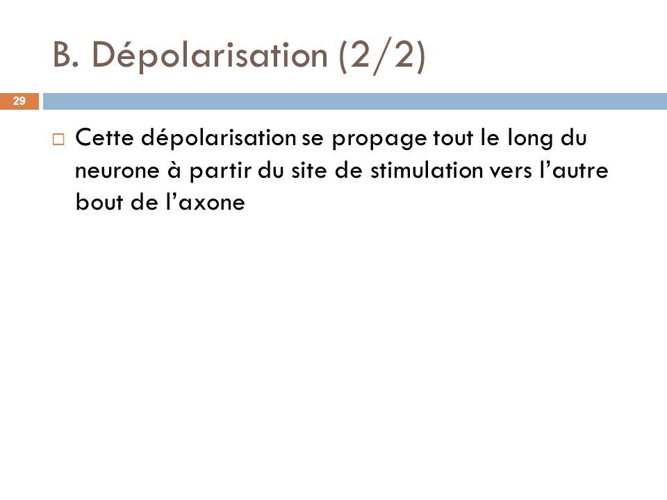 B. Dépolarisation (2/2) Cette dépolarisation se propage tout le long du neurone à partir du site de stimulation vers lautre bout de laxone 29