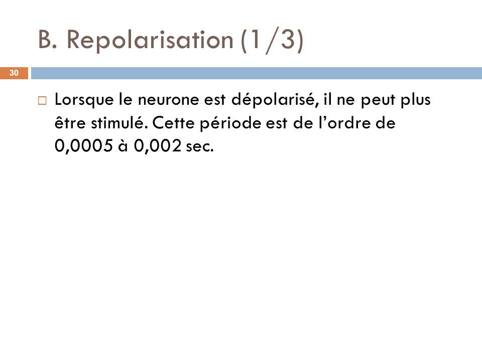 B. Repolarisation (1/3) Lorsque le neurone est dépolarisé, il ne peut plus être stimulé. Cette période est de lordre de 0,0005 à 0,002 sec. 30