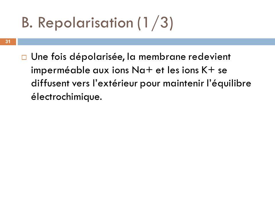 B. Repolarisation (1/3) Une fois dépolarisée, la membrane redevient imperméable aux ions Na+ et les ions K+ se diffusent vers lextérieur pour mainteni