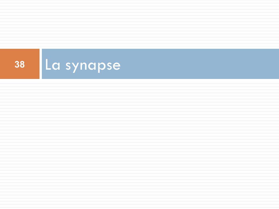 La synapse 38