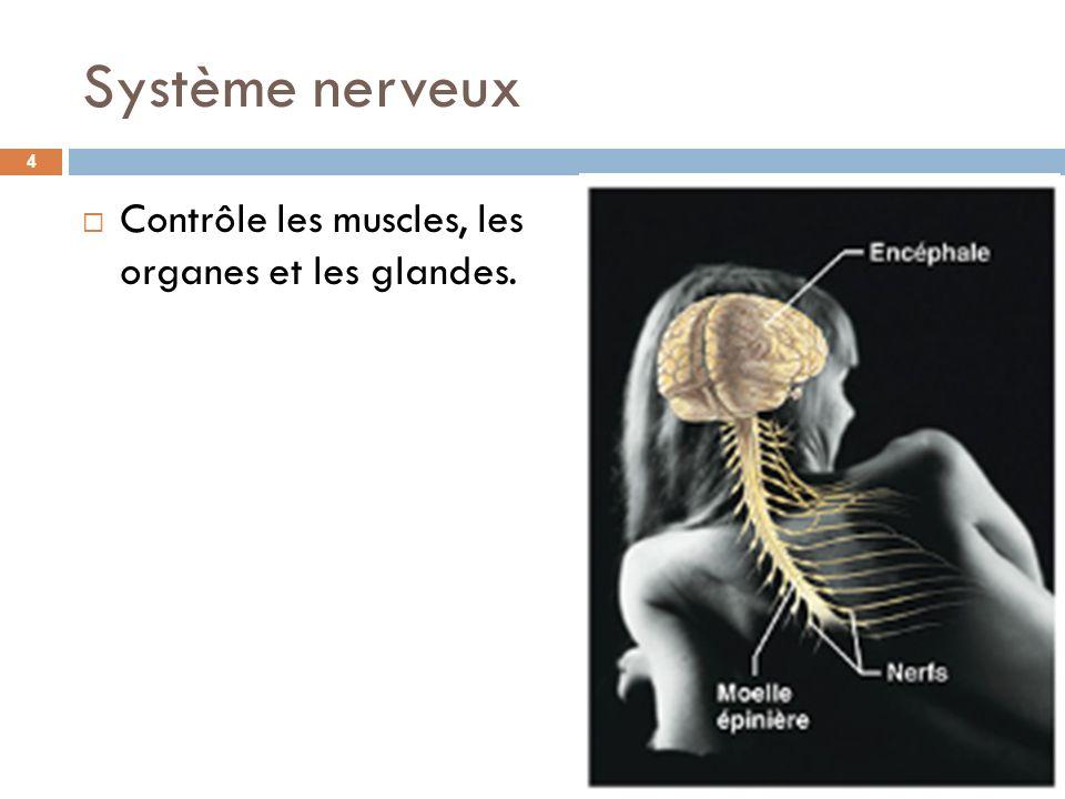 Système nerveux Contrôle les muscles, les organes et les glandes. 4