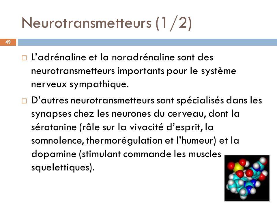 Neurotransmetteurs (1/2) Ladrénaline et la noradrénaline sont des neurotransmetteurs importants pour le système nerveux sympathique. Dautres neurotran