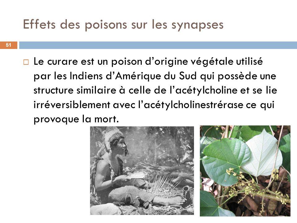 Effets des poisons sur les synapses Le curare est un poison dorigine végétale utilisé par les Indiens dAmérique du Sud qui possède une structure simil