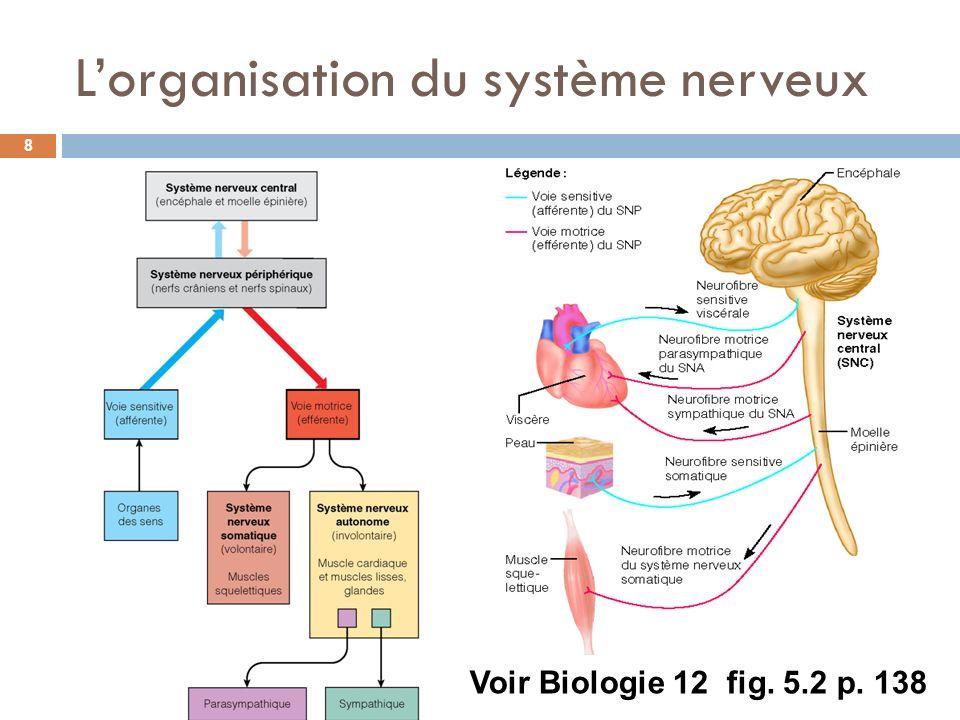 Lorganisation du système nerveux 8 Voir Biologie 12 fig. 5.2 p. 138