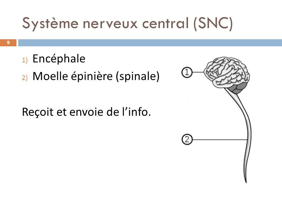 Système nerveux central (SNC) 1) Encéphale 2) Moelle épinière (spinale) Reçoit et envoie de linfo. 9