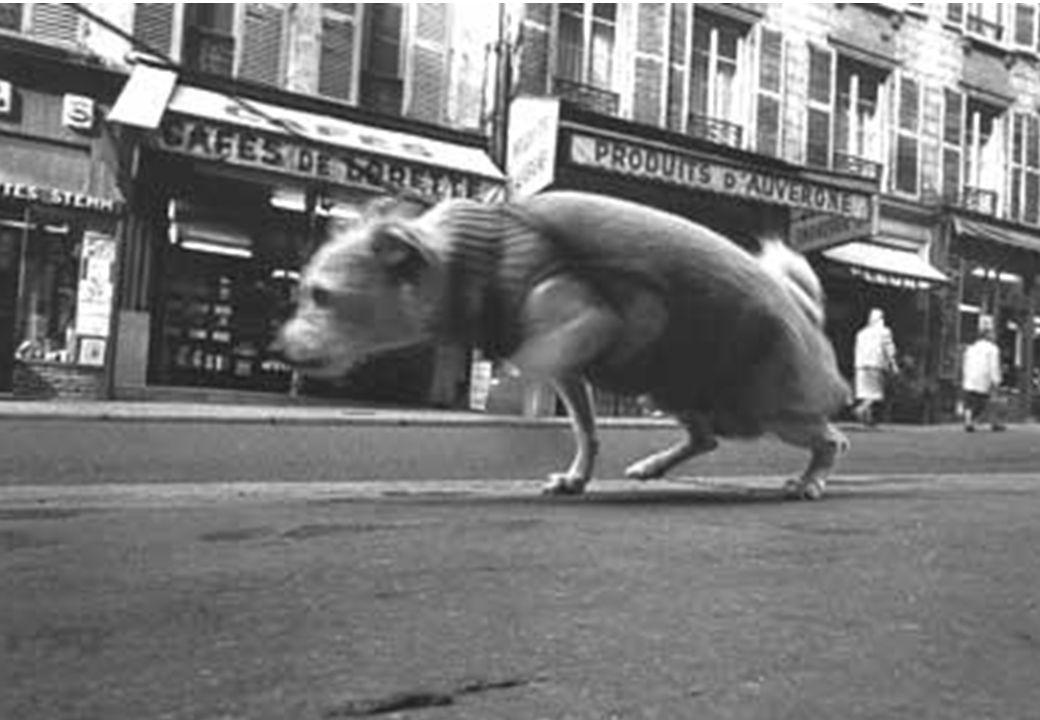 © 2006 WWWarketing Consulting. Tous droits réservés 66 Le chien… Rue Lepic