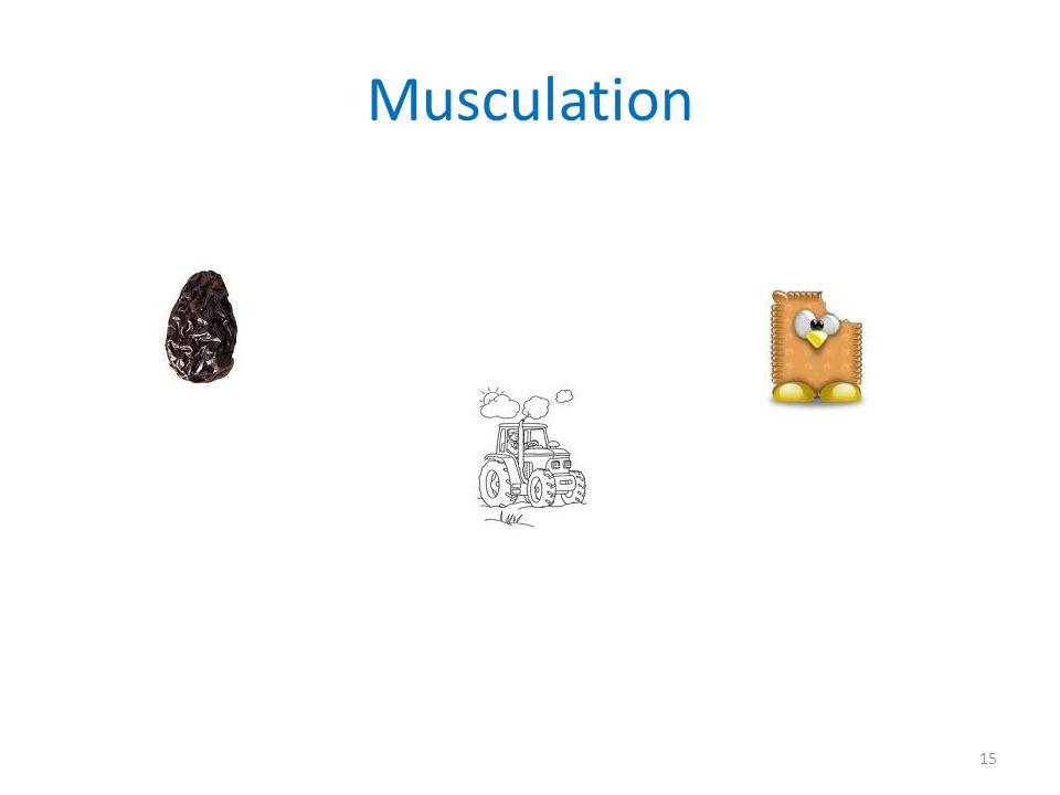 Musculation 15
