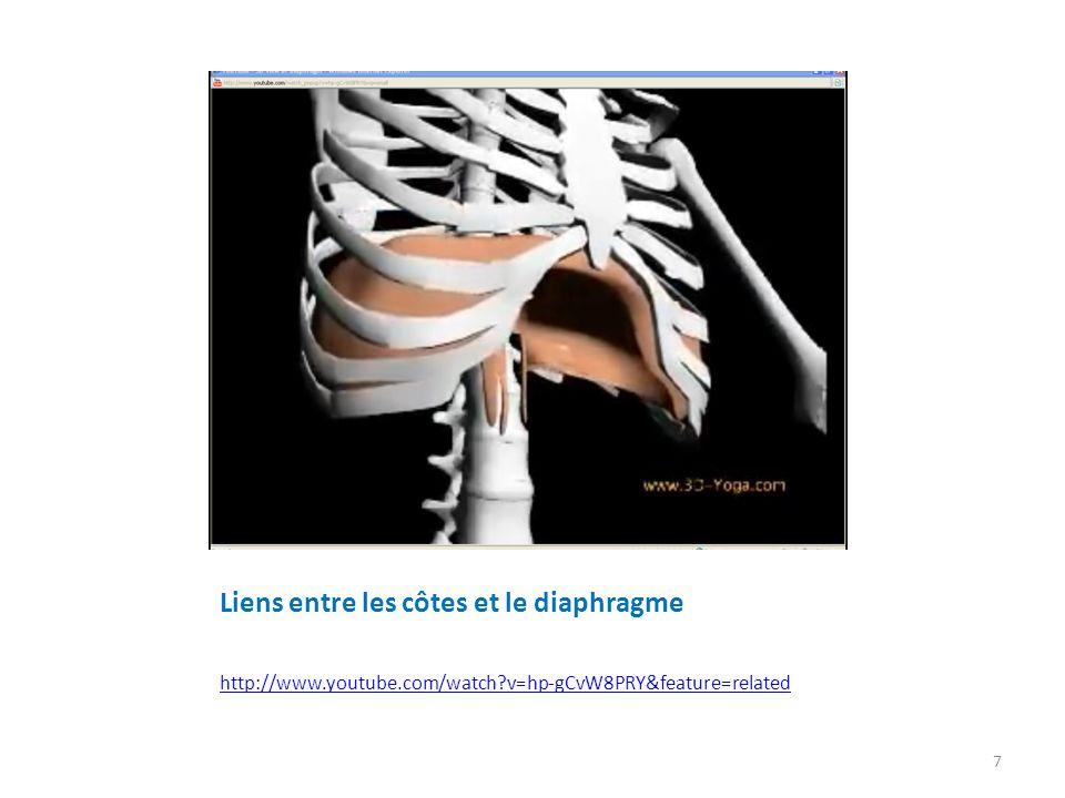 Schéma du Breathing coordination Diaphragme au maximum de lexpireDiaphragme à la fin de linspire 8