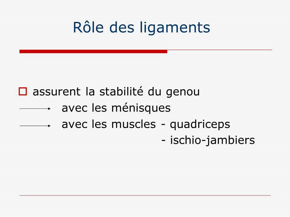 Rôle des ligaments assurent la stabilité du genou avec les ménisques avec les muscles - quadriceps - ischio-jambiers
