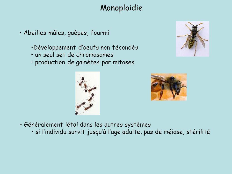Formation de 2 classes dautopolyploides Suivant le nombre de chromosomes homologues: Nb pair : organisme potentiellement fertile, car séggrégation égale des homologues pd la méiose Nb impair : organisme majoritairement stérile car la séggrégation est souvent inégale pd la méiose