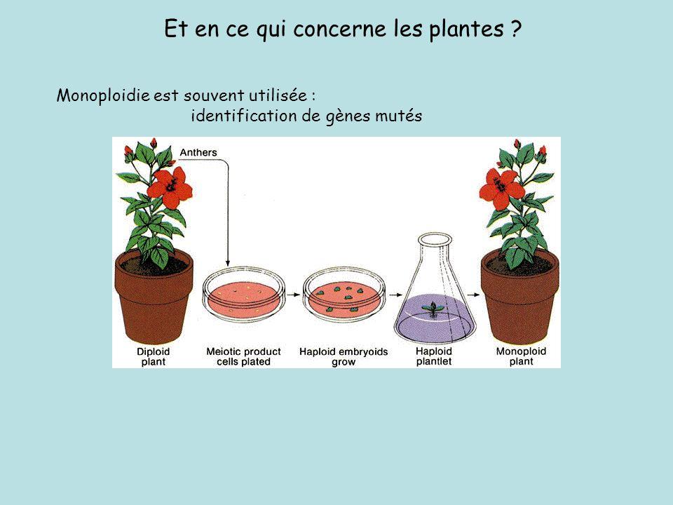 Homologues : Orthologues et Paralogues LHOMOLOGIE : relation entre deux structures, régions chromosomiques, gènes, segment ADN ayant un ancêtre commun LHOMEOLOGIE peut être définie comme létat de génomes, chromosomes, régions chromosomiques ou gènes qui étaient homologues dans un ancêtre commun, qui ont divergé, et qui sont réunis au sein dune même structure polyploïde Ancêtre commun Divergence (spéciation) Allopolyploïdisation Homologue Orthologue Homéologue (même fonction) Duplication au sein du génome et évolution du segment = Paralogue