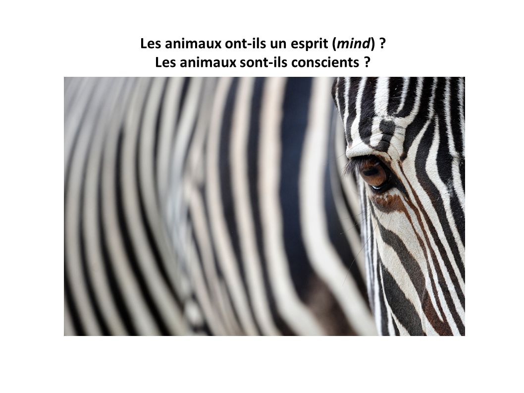 Les animaux ont-ils un esprit (mind) ? Les animaux sont-ils conscients ?