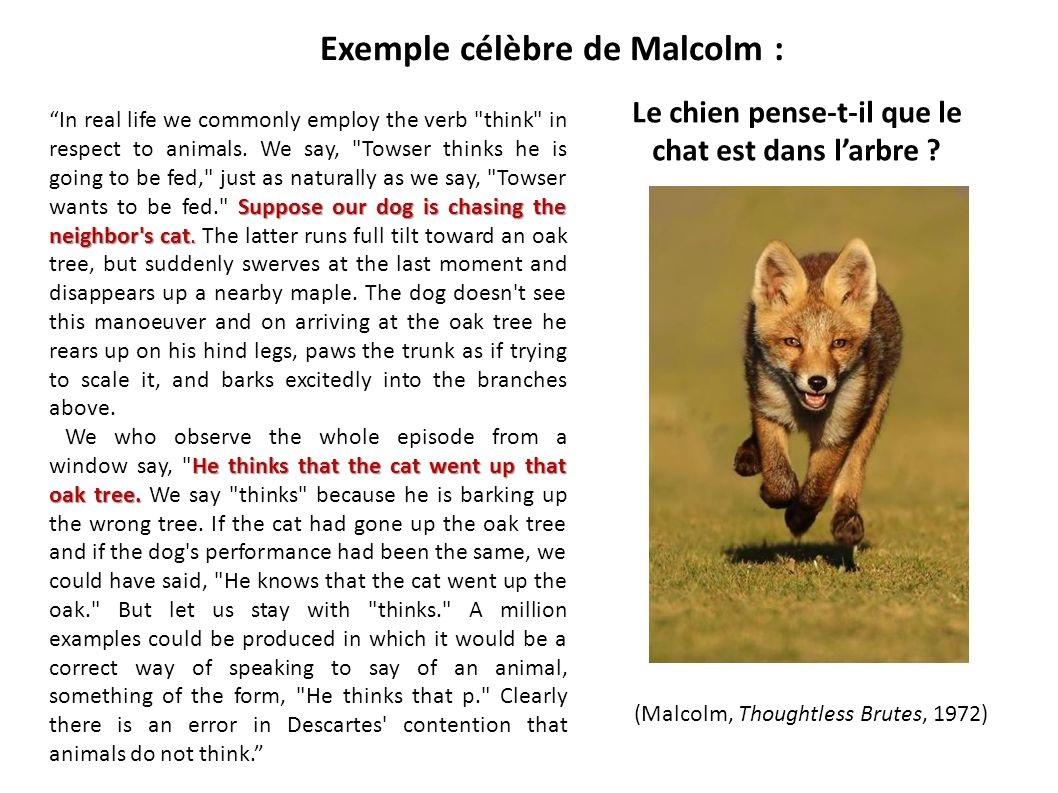 Exemple célèbre de Malcolm : Suppose our dog is chasing the neighbor's cat. In real life we commonly employ the verb