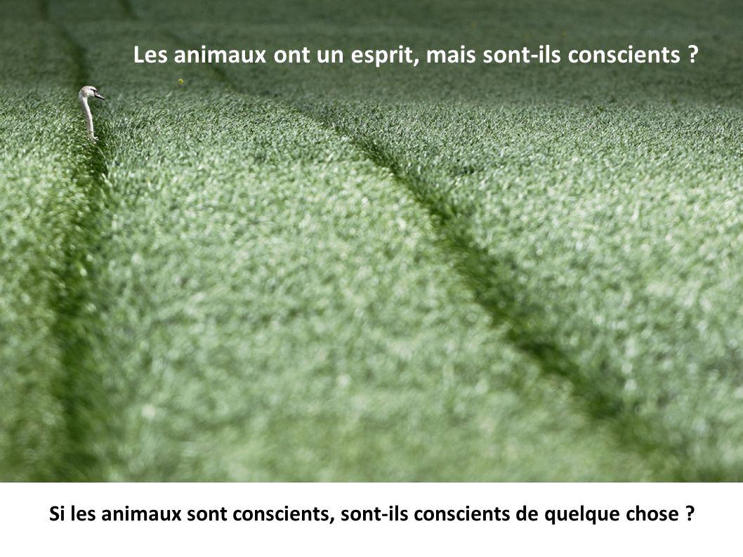 Les animaux ont un esprit, mais sont-ils conscients ? Si les animaux sont conscients, sont-ils conscients de quelque chose ?