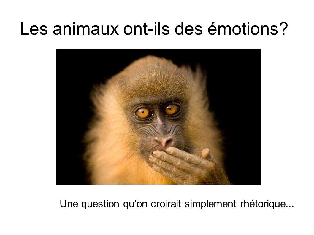 Les animaux ont-ils des émotions? Une question qu'on croirait simplement rhétorique...