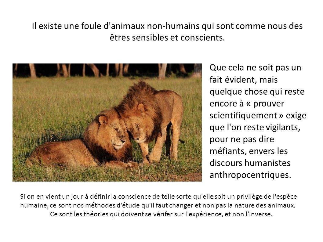 Il existe une foule d'animaux non-humains qui sont comme nous des êtres sensibles et conscients. Que cela ne soit pas un fait évident, mais quelque ch