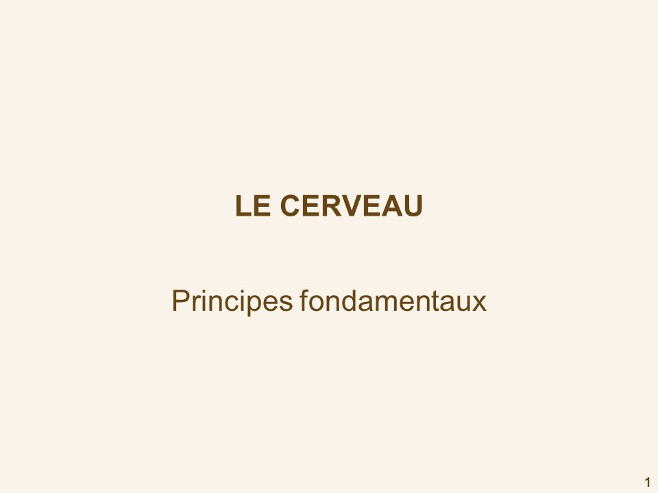 1 LE CERVEAU Principes fondamentaux
