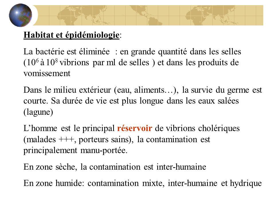 Habitat et épidémiologie: La bactérie est éliminée : en grande quantité dans les selles (10 6 à 10 8 vibrions par ml de selles ) et dans les produits