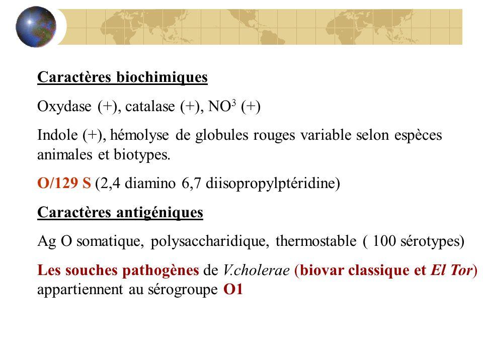 Caractères biochimiques Oxydase (+), catalase (+), NO 3 (+) Indole (+), hémolyse de globules rouges variable selon espèces animales et biotypes. O/129