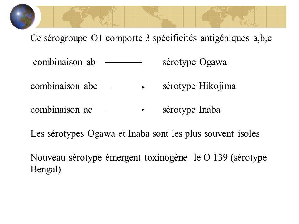 Ce sérogroupe O1 comporte 3 spécificités antigéniques a,b,c combinaison ab sérotype Ogawa combinaison abc sérotype Hikojima combinaison ac sérotype In