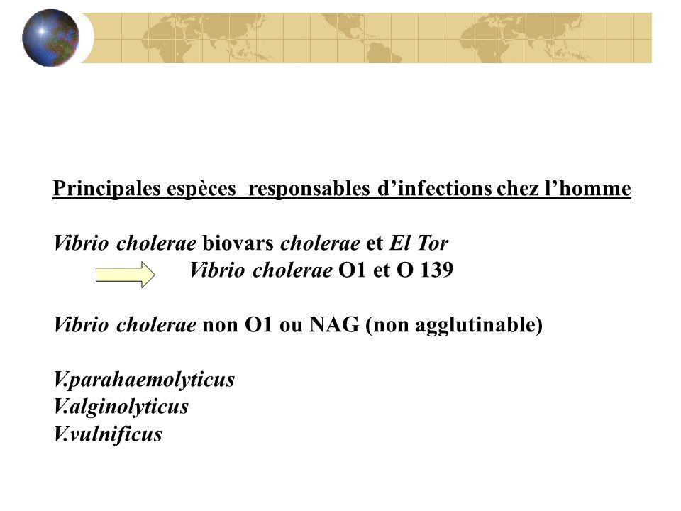 Principales espèces responsables dinfections chez lhomme Vibrio cholerae biovars cholerae et El Tor Vibrio cholerae O1 et O 139 Vibrio cholerae non O1